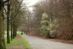 Amsterdamse Bos in early spring
